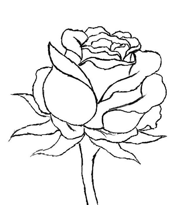 How to Draw a Red Rose is part of Roses drawing, Rose drawing, Flower drawing, Red rose drawing, Drawings, Flower drawing tutorials - How to Draw a Red Rose In this how to, I will be guiding you step by step in the process of drawing a beautiful red rose  Be sure to see the following steps provided by myself )  All images provided by I 365 Art  There are 9 steps in total  Some tools you will need