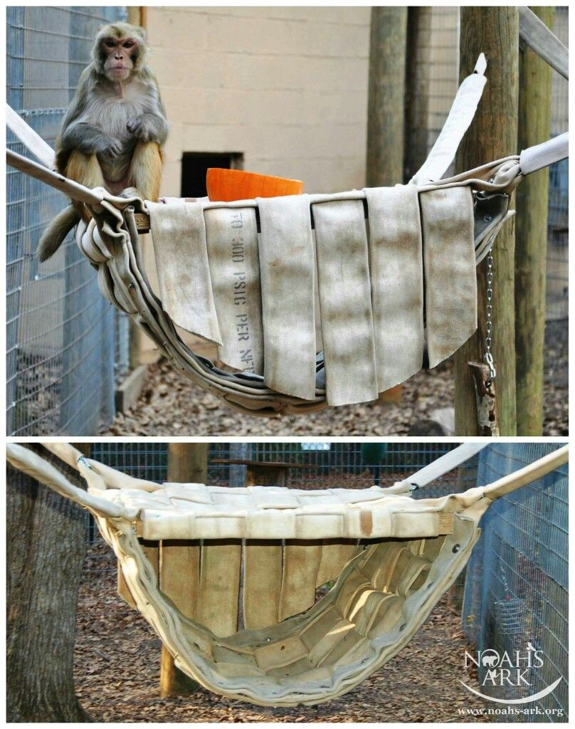 Creative hammock with sleeping nook by Hose2Habitat. Great for small primate or small arboreal animals. Tamandua!