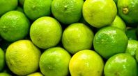 How to Grow a Mexican Lime Tree | eHow
