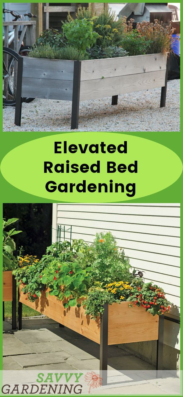 Elevated Raised Bed Gardening: The Easiest Way to Grow! -   test pages