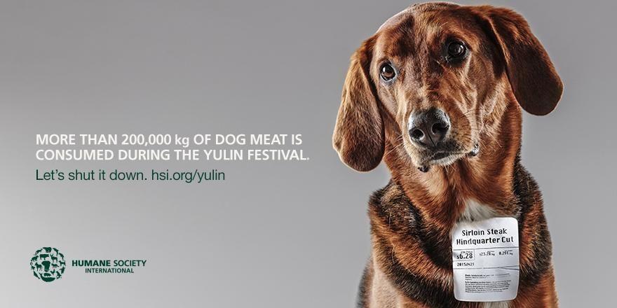 Humane Society International On Twitter Humane Society Yulin Dogs