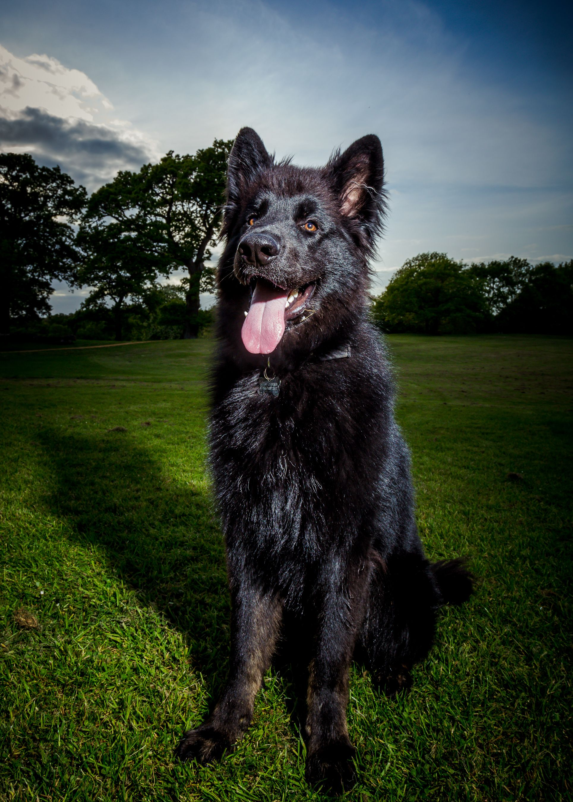 Dorset Dogs Celebrate Dorset S Countryside With Their 2000th
