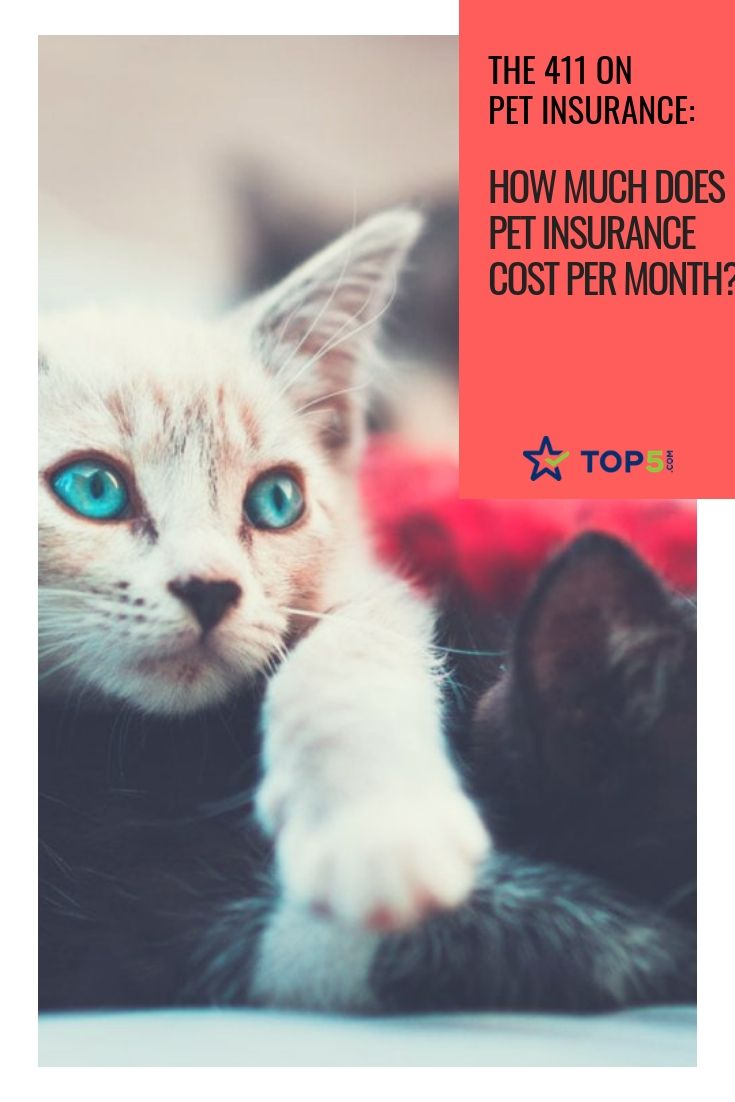 Az on pet insurance how much does pet insurance cost per