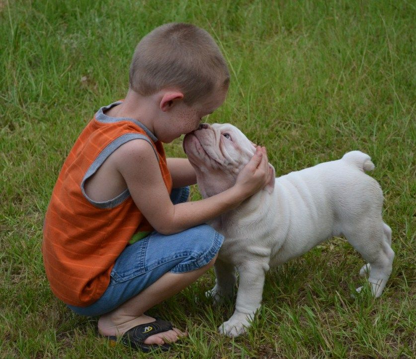 Bulldogge & Kid