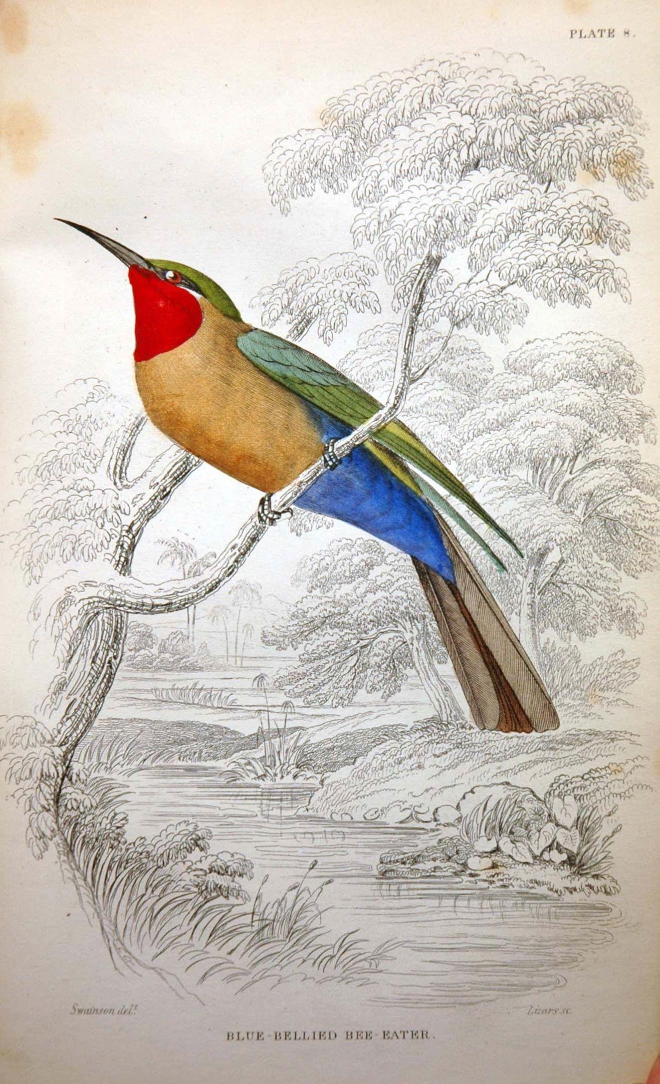Vintage bird illustration | Home Ideas | Pinterest