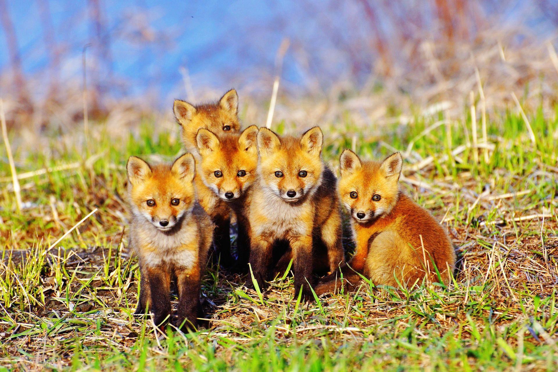 Фото картинки животных для детей