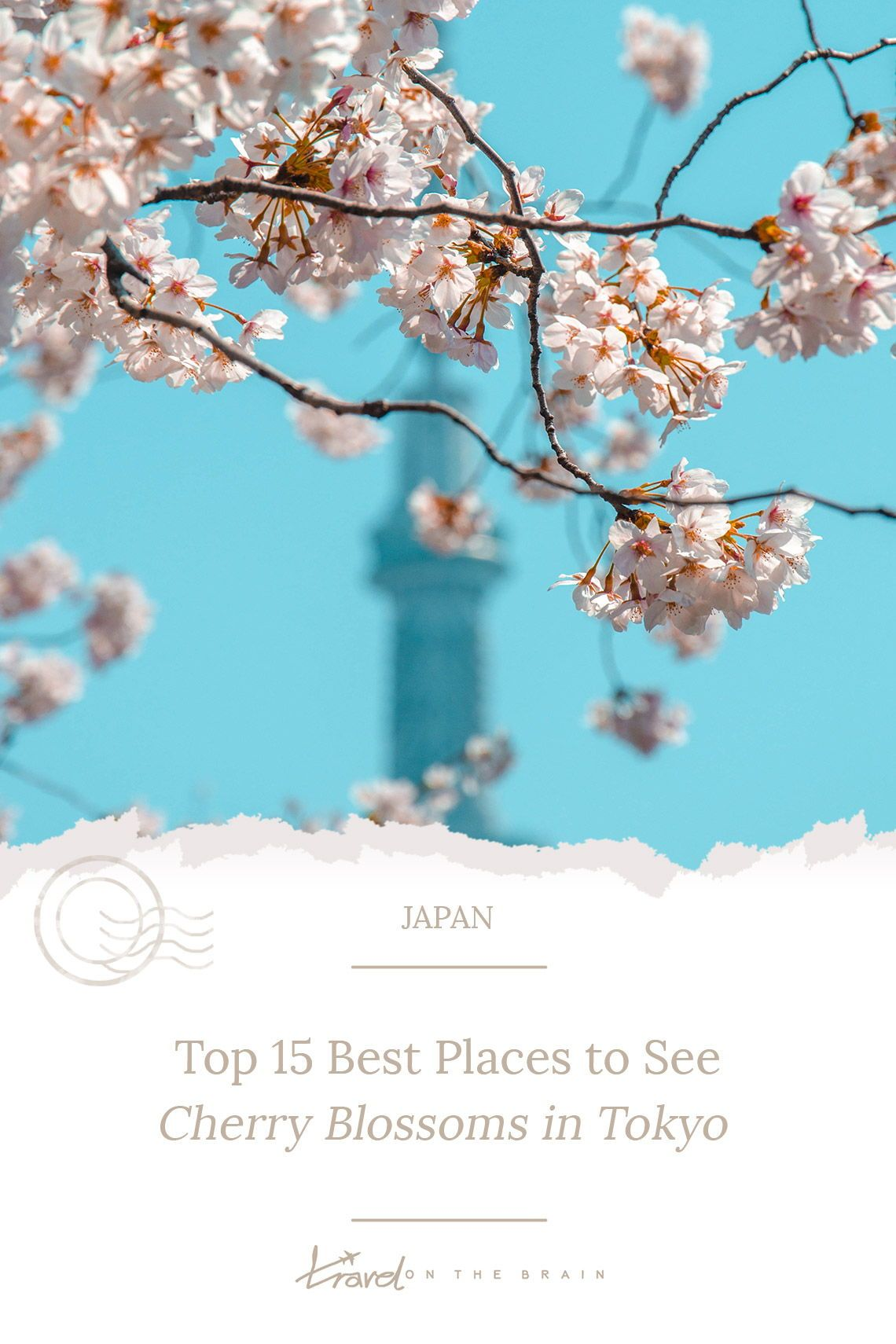 25 Best Places To See Cherry Blossoms In Tokyo Free Guide Cherry Blossom Blossom Cherry Blossom Japan