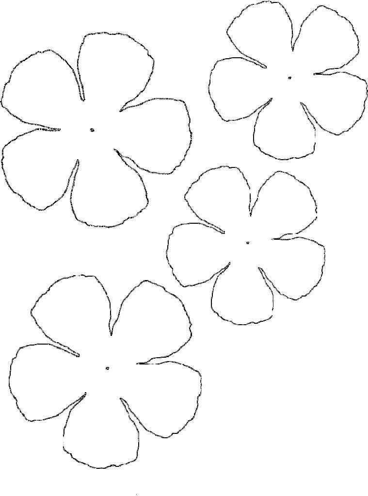 Ranunculus Flower Paper Flower Template Flower Template Felt Flowers