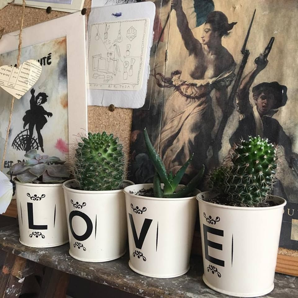 classy pictures of cactus house plants. 71 Classy Cactus Interior Decor to Give Your Rooms a Makeover  classy pictures of cactus house plants Pictures Of House Plants Home Design Plan