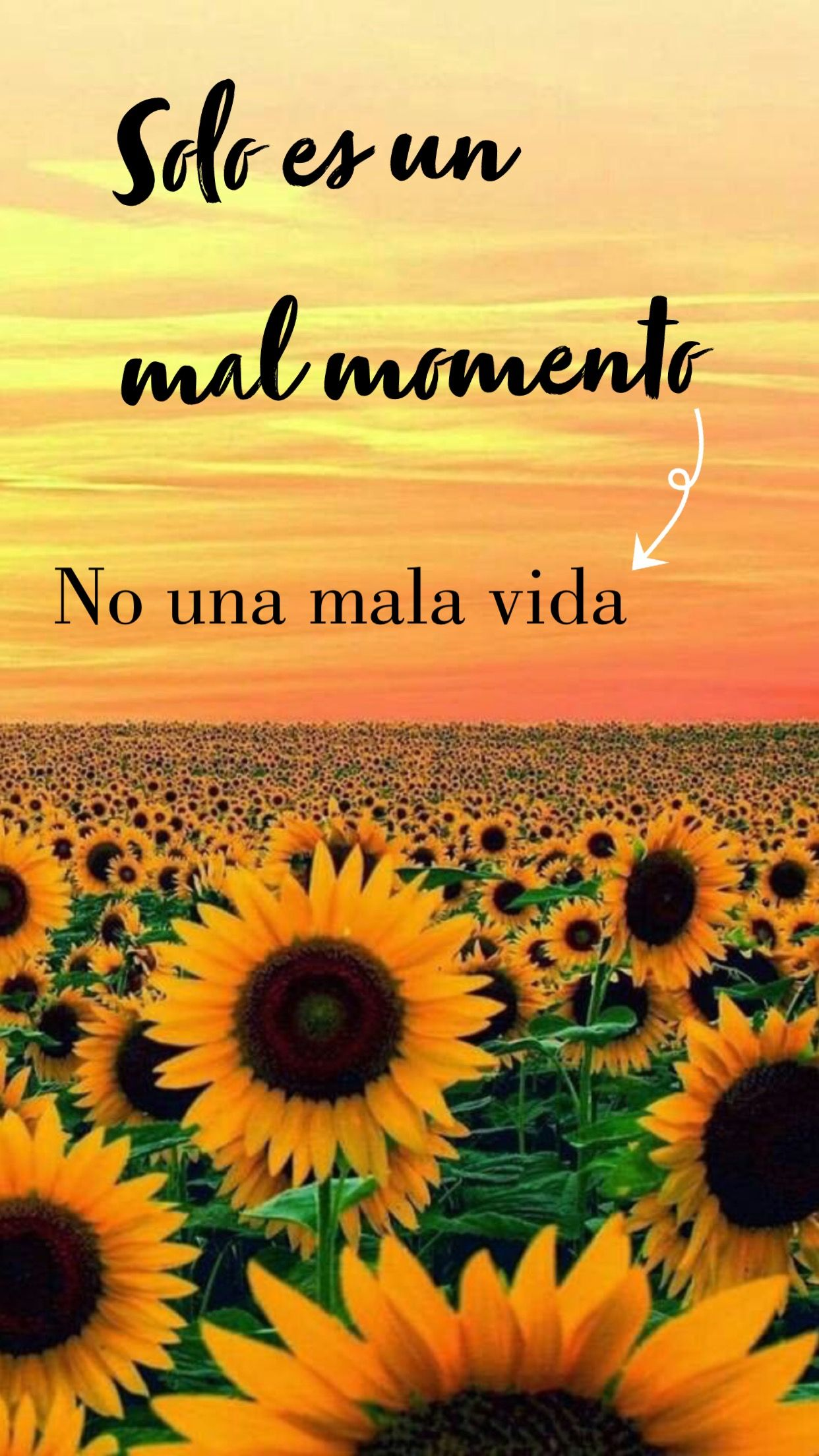 Pin By Erika Ayala E On Quotes Sunflower Quotes Its Friday Quotes Flower Quotes * frases en conmemoracion al dia internacional de la mujer para compartir.feliz dia de la mujer. pin by erika ayala e on quotes