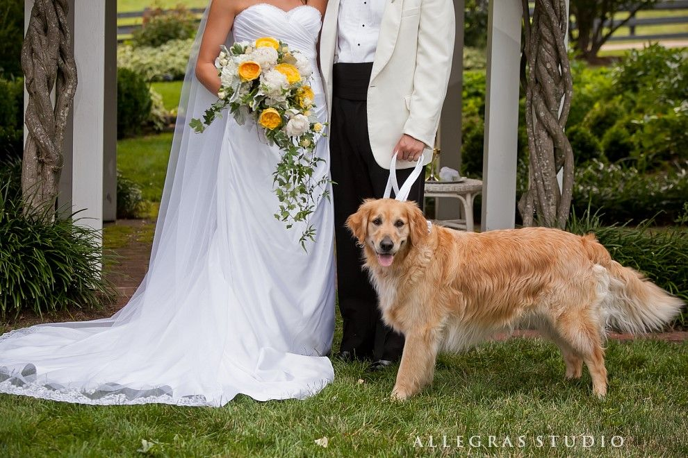 All we need is the little fur baby #ccseventsrva #allegrasstudio photography #privateestate