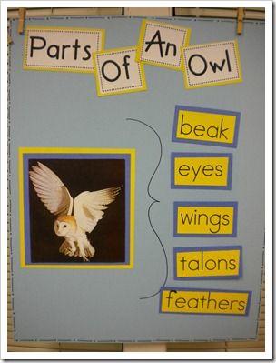 Owl Unit and books.