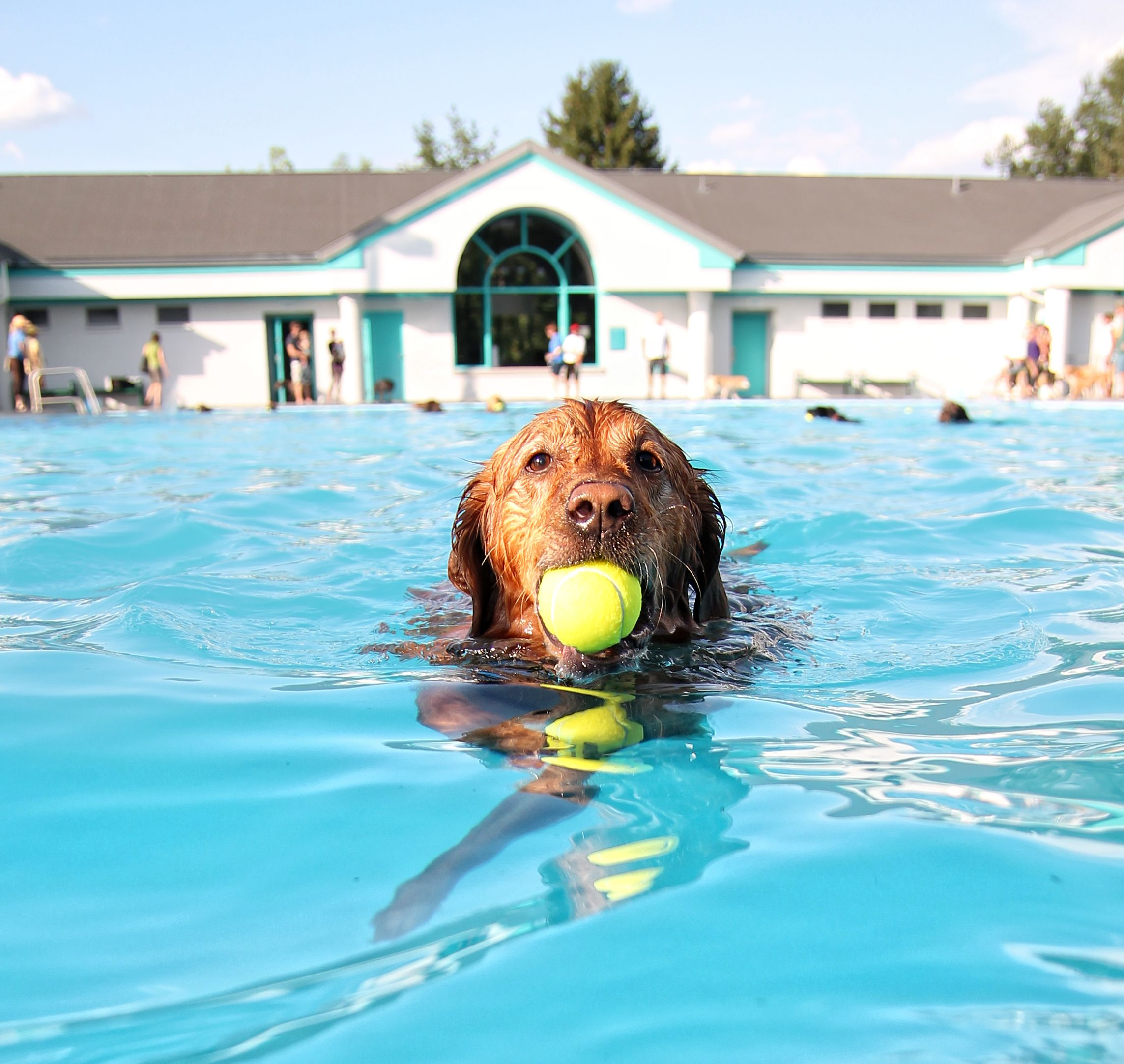 If a dog is struggling to swim, he may accidentally inhale