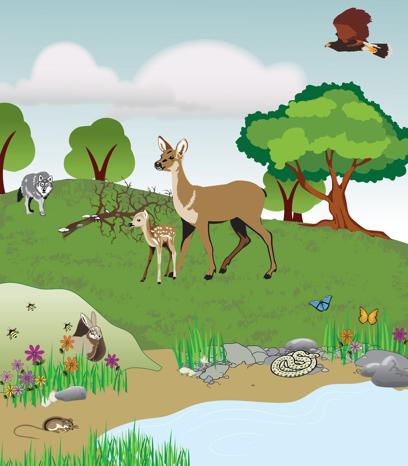Characteristics of life Interactions in Ecosystems  Project Share  ClassroomScience  Science