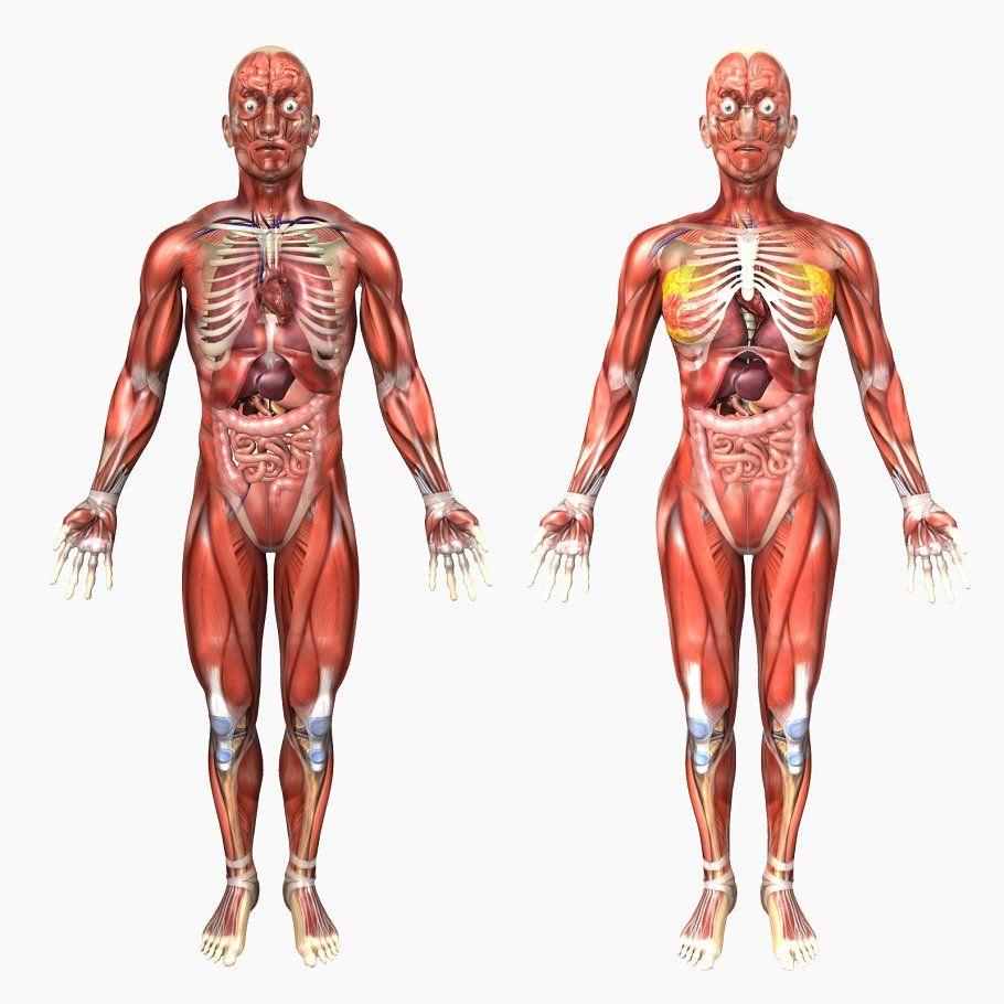 Male and Female Anatomy | Anatomy