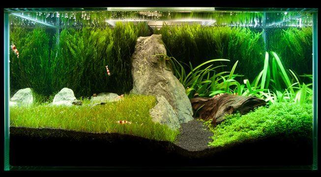 Java Moss How To Grow Carpets Walls Trees And More Aquarium Landscape Aquascape Aquarium