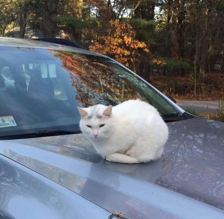 wild loaf successfully conquers vehicle