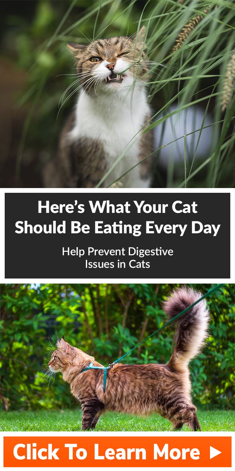 Vet Here S What Your Cat Should Be Eating Every Day Cats Indoor Pets Cat Facts