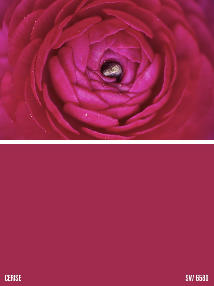 Sherwin williams pink paint color cerise sw 6580 - Coloration rouge cerise ...