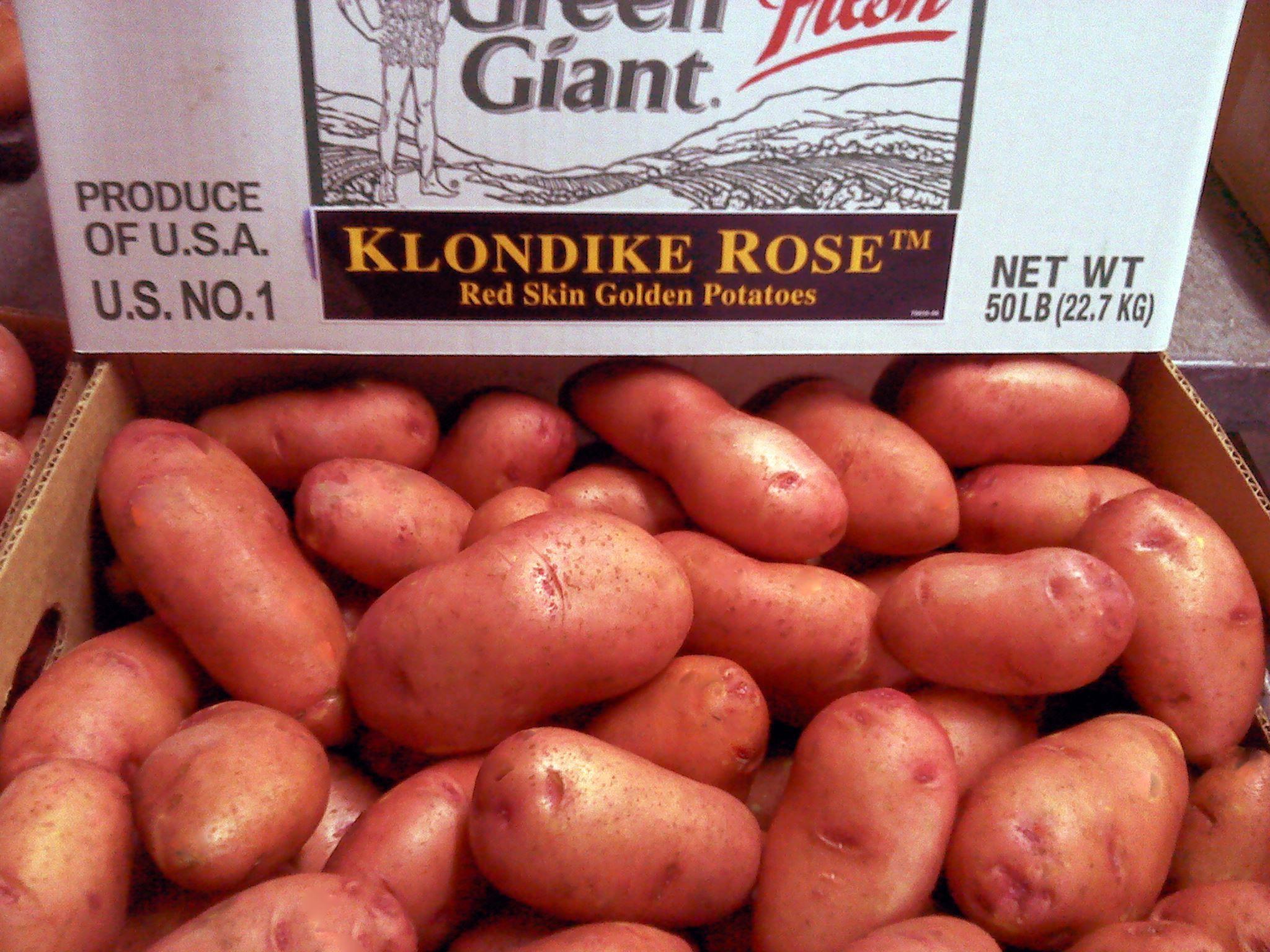 Ever wonder why potatoes turn green? Potatoes turn green