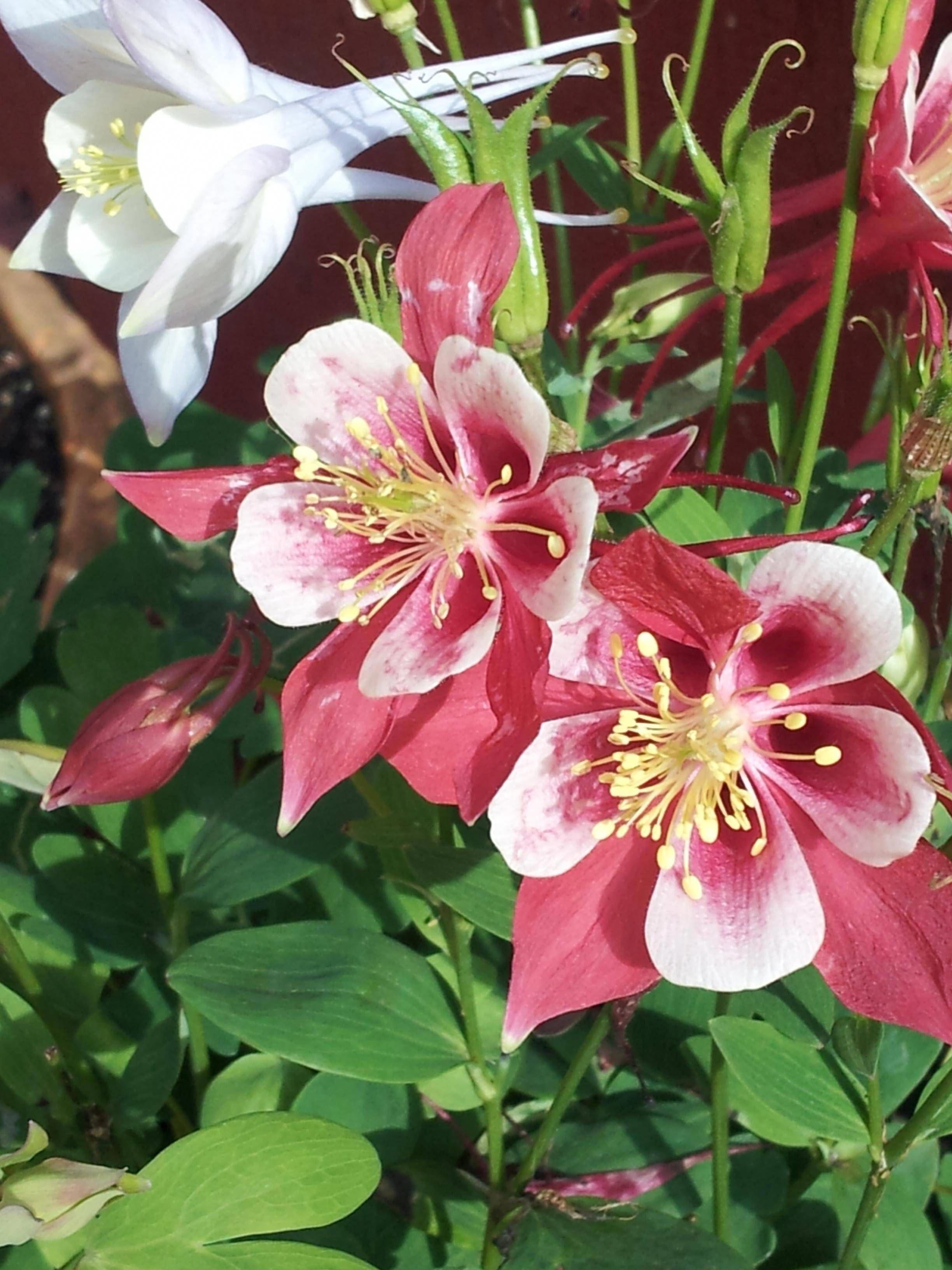 Pin On Backyard Flower Beds