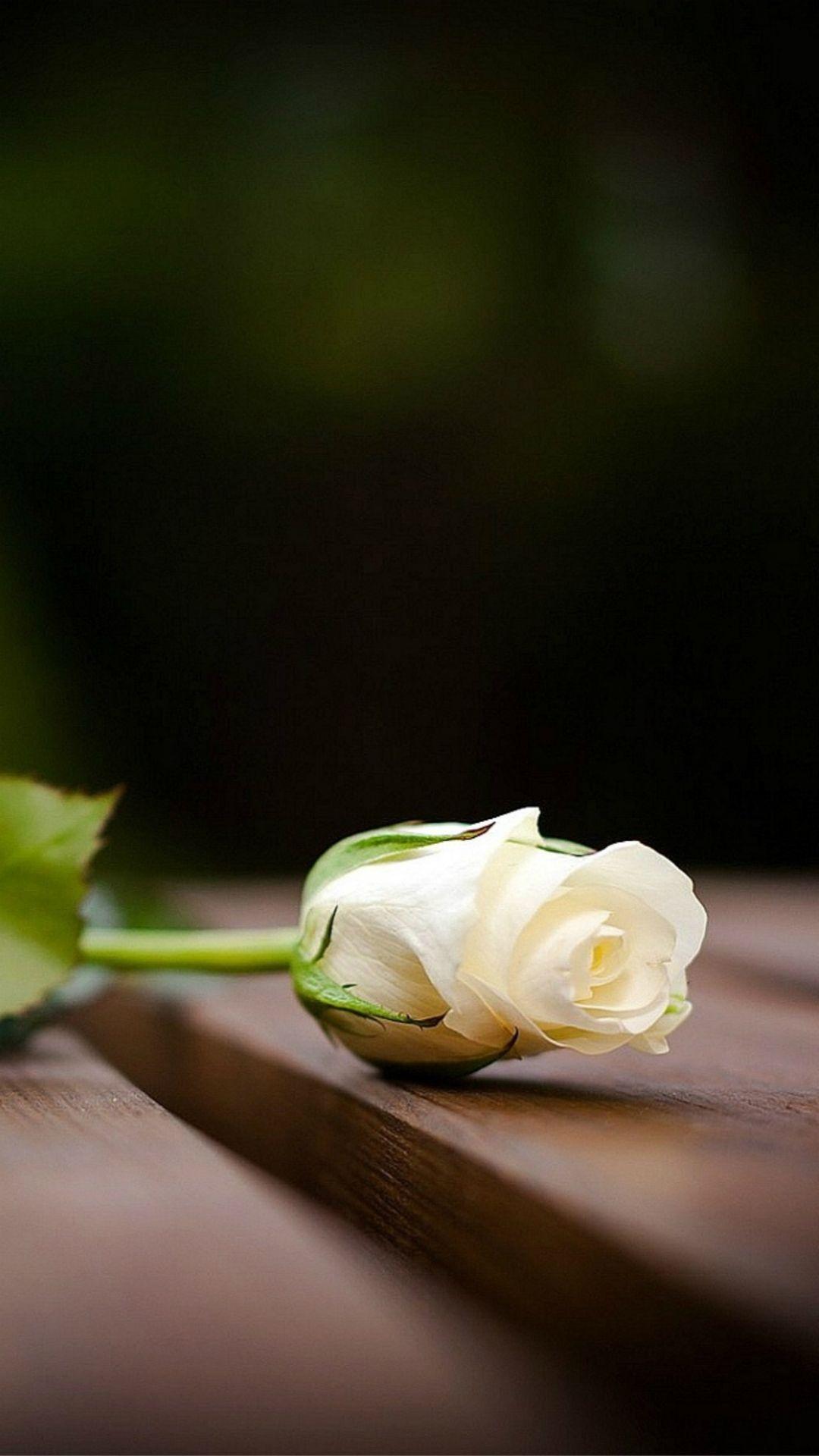 Elegant White Rose On Wood Blur IPhone 6 Wallpaper