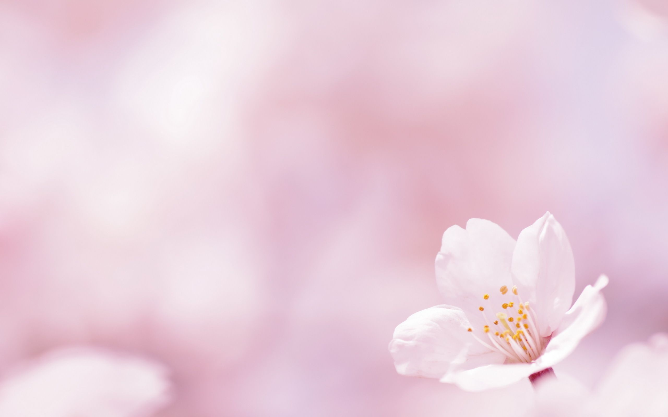 Flower Wallpapers Pink Hd Resolution Natures Wallpapers In 2018