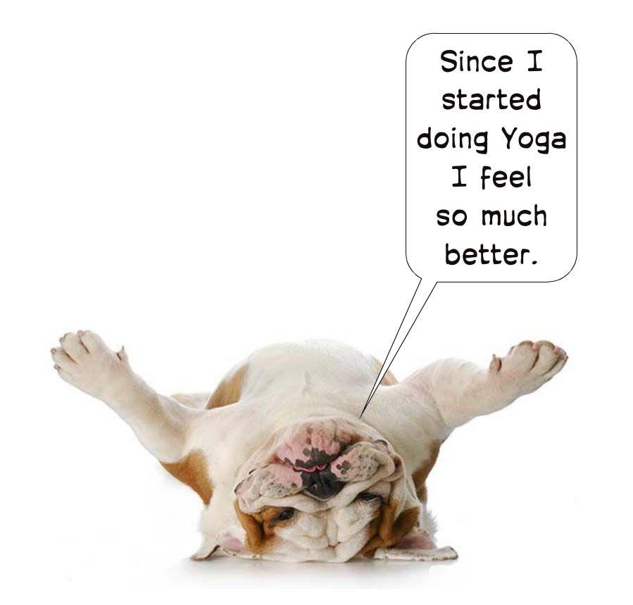 Över 1 000 bilder om Yoga Humor på PinterestYoga humor, Yoga och ...