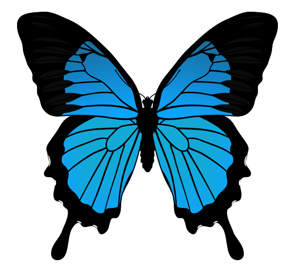 How to Draw Animals: Butterflies, Their Anatomy and Wing ...