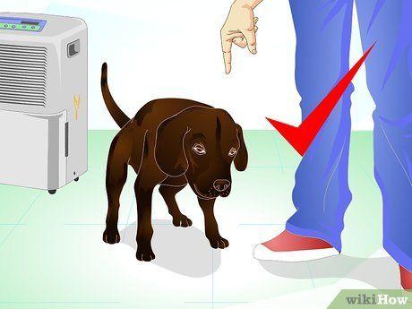 Das Markierverhalten von Hunden unterbinden (mit Bildern