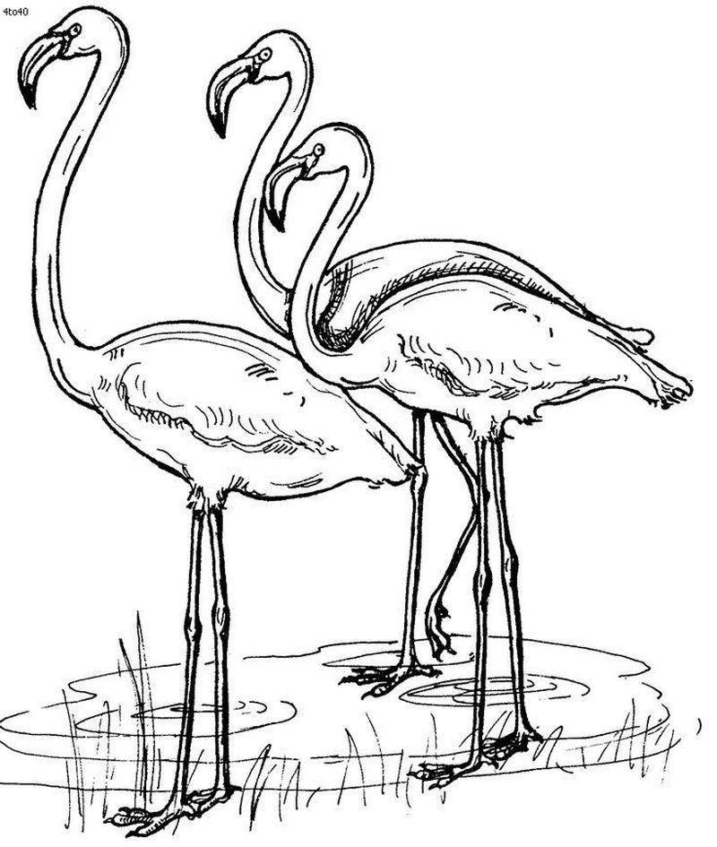 Beautiful Flamingos Printable Coloring Pages di 2020