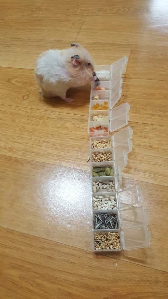 Buffet for hamster