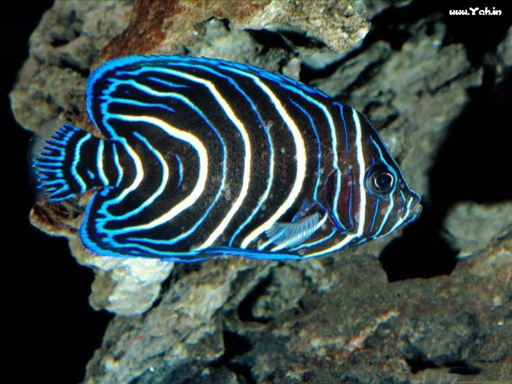 Sea creatures pictures animals deep sea 3d inhabitants for Salt water fishes