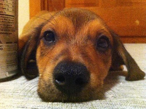 Dog Finder Adopt A Dog Or Cat Near You Dog Finder Child