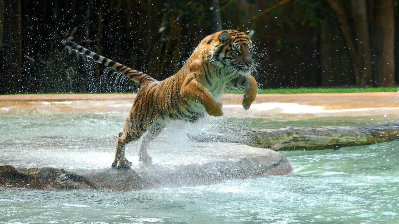 Mobile Phone Wallpapers Download 1600 1200 Baby Tiger Pictures Wallpapers 53 Wallpapers Adorable Wallpapers Tiger Wallpaper Tiger Pictures Tiger Images