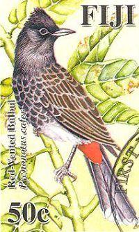 Filatelia: Pájaros del Pacífico: Ulurua pycnonotus cafer