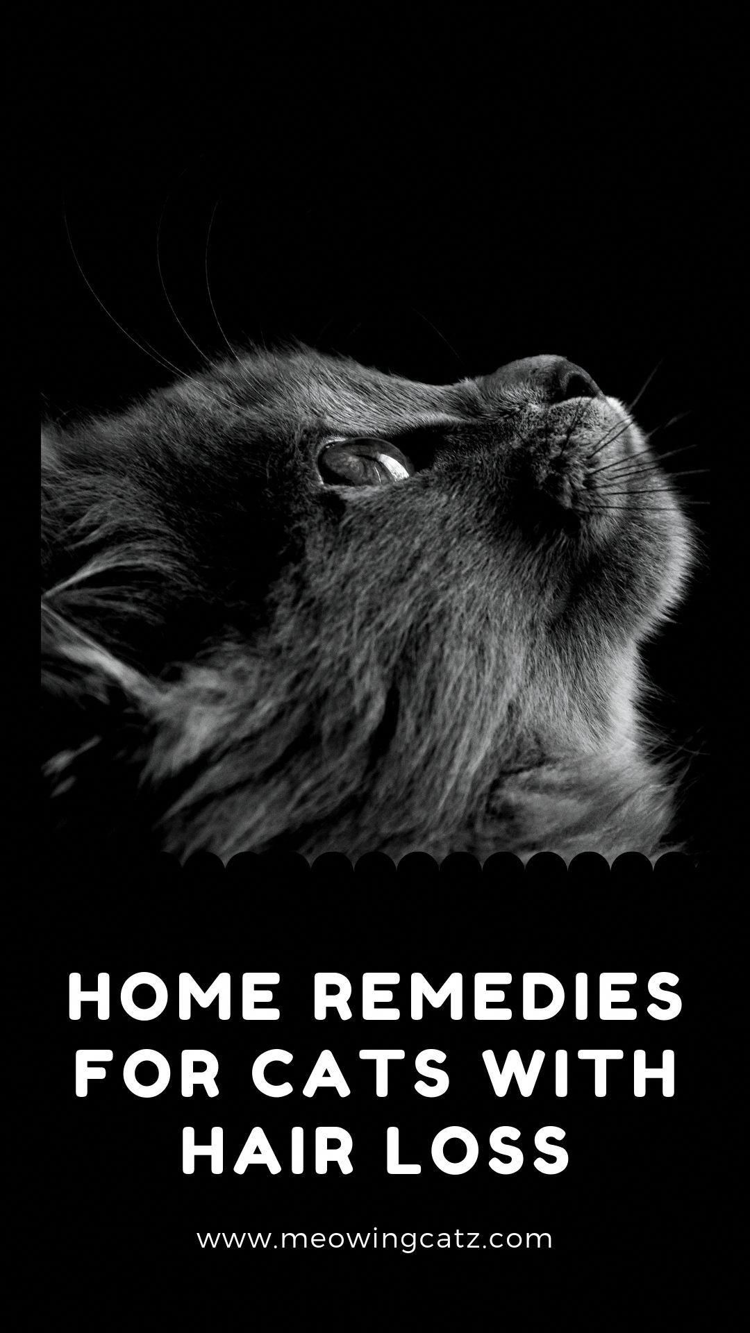 Is your cat losing hair? then learn  in this post how to protect your cat with home remedies for cats with hair loss. #cat #cats #kittens #catsandkittens #cattips #pets #cathair loss #cathairlossremedies #HairLossCure