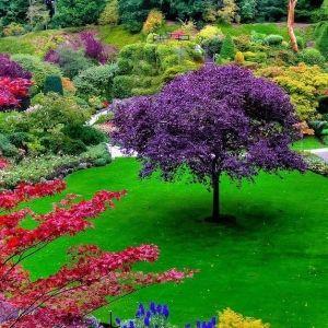 Loverly Garden