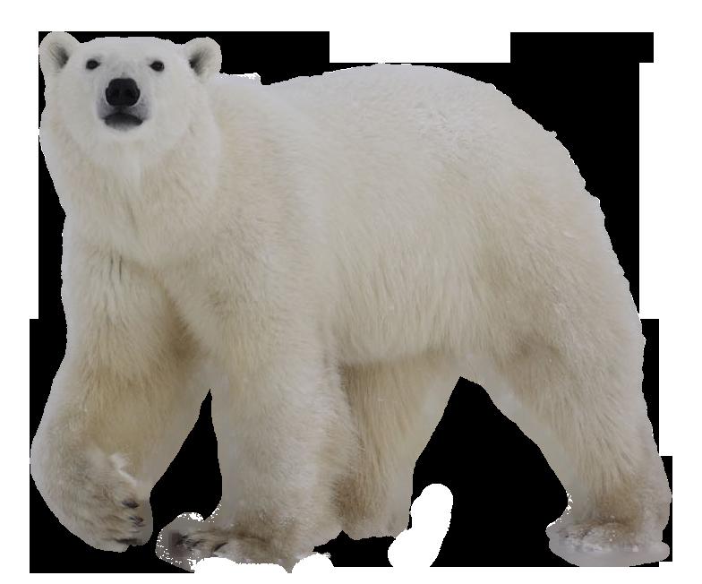 Bear Polar Png By Cendredelune Polar Bear Bear Animated Animals