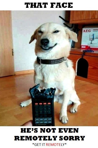 He S Not Even Remotely Sorry Dog