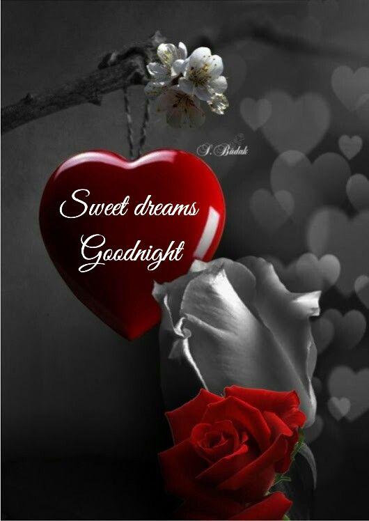 Dankeschön Daizo Good Night Good Night Greetings Good Night