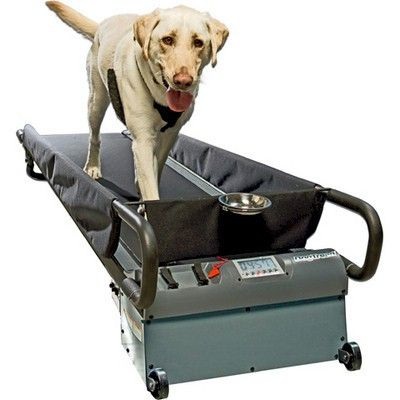 Dogtread Large Dog Treadmill Dog Treadmill Dog Treadmills Best