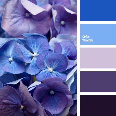 Almost Black Blue Color Of Violets Dark Purple Designer Palette House Schemes Hydrangea Orchids Selection
