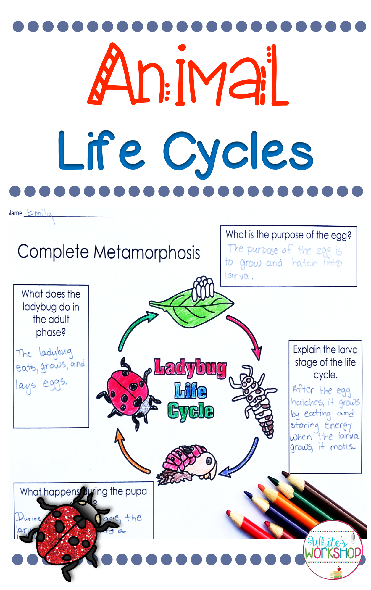 hight resolution of Check out these animal life cycle activities for 3rd