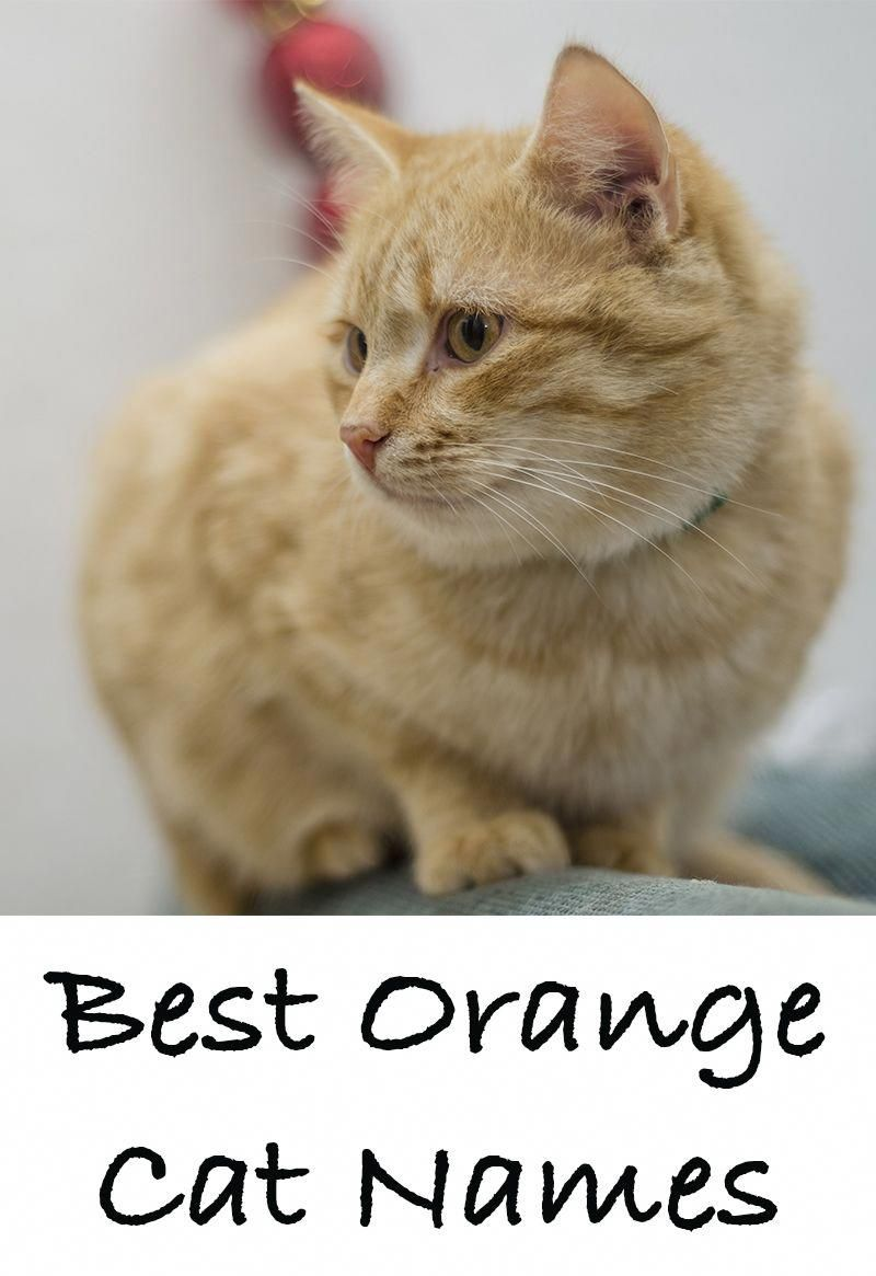 Orange Cat Names - 169 Amazing Names For Ginger Kittens