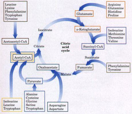 Chart of Uric Acid Level