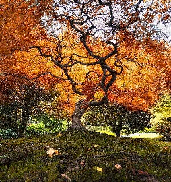 Autumn Dreaming, Oregon