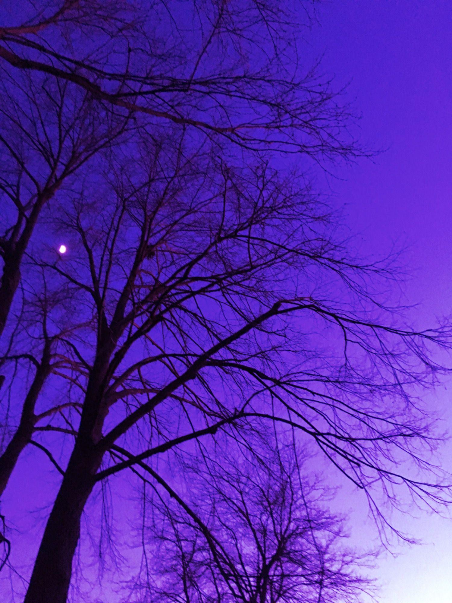 libra #pisces | My Amino Profile | Violet aesthetic, Dark purple