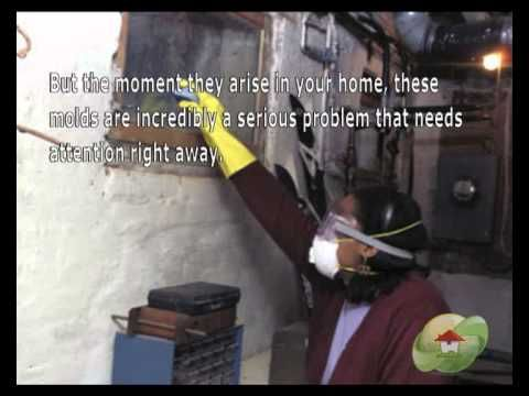 Mold Removal Contractor Weston Fl Phone 1 800 578 7038 Black