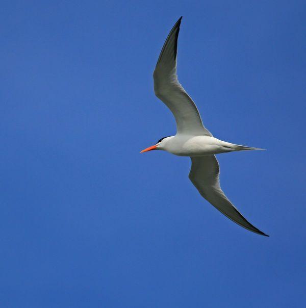 First attempt at Birds-In-Flight